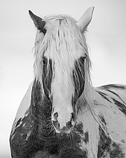 Thor Comes Close by Carol Walker (Black & White Photograph)