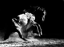 Dark Dance by Carol Walker (Black & White Photography)