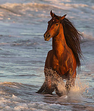 Ocean Horse at Sunset by Carol Walker (Color Photograph)