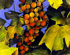 Grape Harvest at Dusk by Jane Sterrett (Giclee Print)