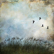 Beach Grass and Four Seagulls by Gloria Feinstein (Color Photograph on Aluminum)