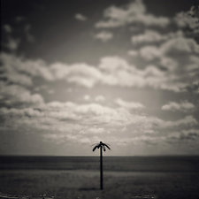 Palm Tree by Gloria Feinstein (Black & White Photograph on Aluminum)