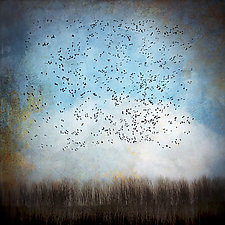 Snow Geese in Blue Sky by Gloria Feinstein (Color Photograph on Aluminum)