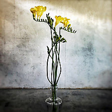 Yellow Flowers by Gloria Feinstein (Color Photograph on Aluminum)
