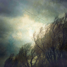 Trees and Snow Geese by Gloria Feinstein (Color Photograph on Aluminum)