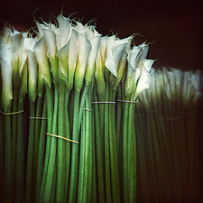 Lilies by Gloria Feinstein (Color Photograph on Aluminum)