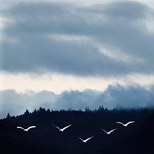 Five White Birds by Gloria Feinstein (Color Photograph on Aluminum)