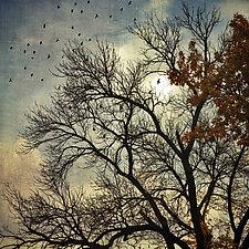 Sun Through Branches by Gloria Feinstein (Color Photograph on Aluminum)