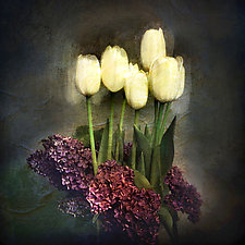 Five Tulips by Gloria Feinstein (Color Photograph on Aluminum)