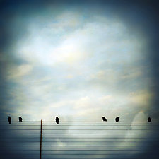 Six Birds in Pastel Sky by Gloria Feinstein (Color Photograph on Aluminum)