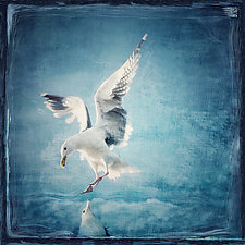 Seagull Landing by Gloria Feinstein (Color Photograph on Aluminum)