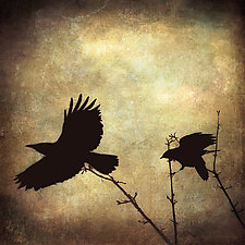 Two Crows by Gloria Feinstein (Color Photograph on Aluminum)