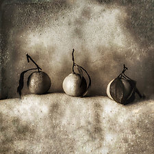 Oranges by Gloria Feinstein (Black & White Photograph on Aluminum)