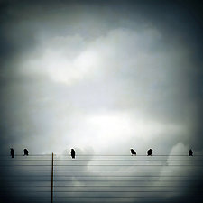 Six Birds by Gloria Feinstein (Color Photograph on Aluminum)