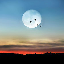 Full Moon and Pelicans by Gloria Feinstein (Color Photograph on Aluminum)