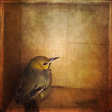 Yellow Bird by Gloria Feinstein (Color Photograph on Aluminum)