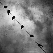 Birds on a Wire by Gloria Feinstein (Black & White Photograph on Aluminum)