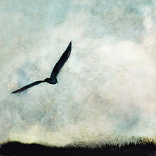 Seagull in Flight by Gloria Feinstein (Color Photograph on Aluminum)