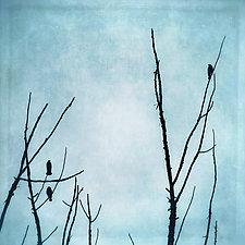 Three Birds in Blue Sky by Gloria Feinstein (Color Photograph on Aluminum)