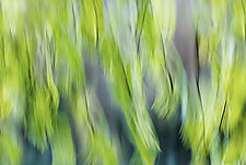 Wispy Vine by Angela Cameron (Color Photograph)