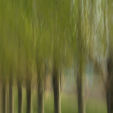 Sequential II by Angela Cameron (Color Photograph)
