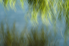 Pond Foliage by Angela Cameron (Color Photograph)