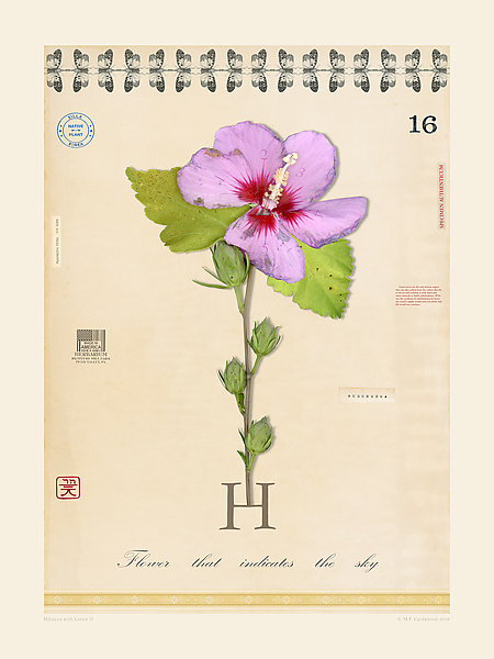 Hibiscus with Letter H