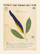 Amazon Associations by MF Cardamone (Giclee Print)