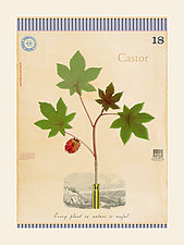Castor Bean is Useful by MF Cardamone (Giclee Print)