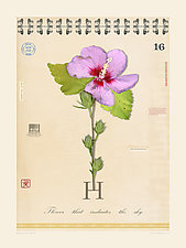 Hibiscus with Letter H by MF Cardamone (Giclee Print)