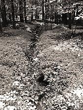 Nature's Pathway II by Joni Purk (Black & White Photograph)