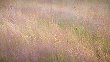 Summer Grass No. 1 by Steven Keller (Color Photograph)