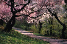 Spring Montage I by Patricia Garbarini (Color Photograph)