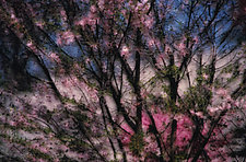 Spring Montage III by Patricia Garbarini (Color Photograph)
