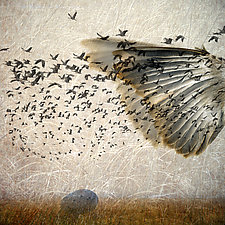 Flight 1 by Patricia Barry Levy (Giclee Print)