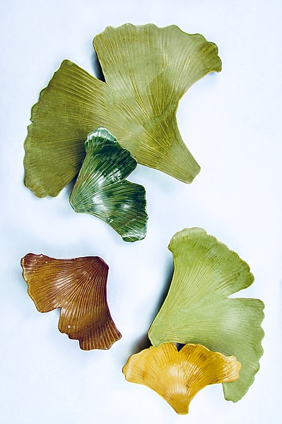 Spring Ginkgoes
