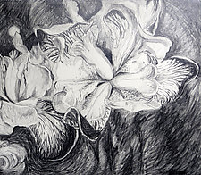 Iris by Debora  Stewart (Charcoal Drawing)