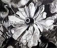 Coneflower in Charcoal by Debora  Stewart (Charcoal Drawing)