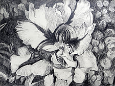 Parrot Tulip by Debora  Stewart (Charcoal Drawing)