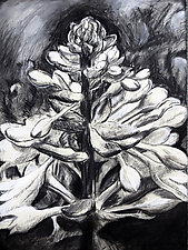 Hosta by Debora  Stewart (Charcoal Drawing)