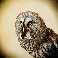 Great Gray Owl I by Yuko Ishii (Color Photograph)
