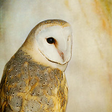 Song of a Barn Owl II by Yuko Ishii (Color Photograph)