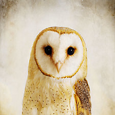 Song of a Barn Owl I by Yuko Ishii (Color Photograph)