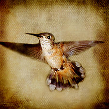 Song of a Rufous Hummingbird I by Yuko Ishii (Color Photograph)