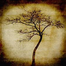 Soul Tree by Yuko Ishii (Color Photograph)