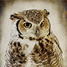 Healing Owl III by Yuko Ishii (Color Photograph)