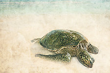 Sea Turtle I by Matt Anderson (Color Photograph)