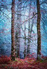 Into the Mystic Forest by Matt Anderson (Color Photograph)