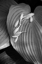 Fallen Flowerlettes by Russ Martin (Black & White Photograph)