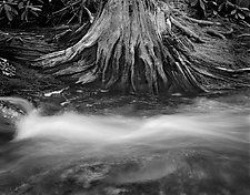 Flowing Water and Old Tree Stump by Russ Martin (Black & White Photograph)
